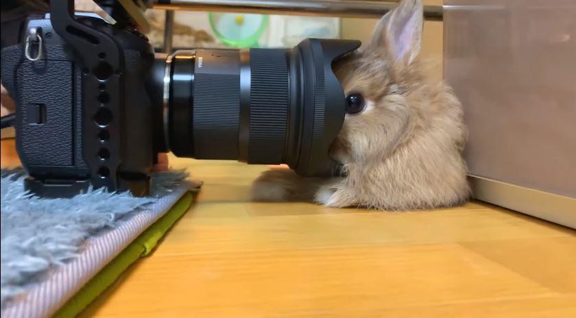 主人太愛拍!萌兔超不怕鏡頭「半張臉被吃掉」也不為所動