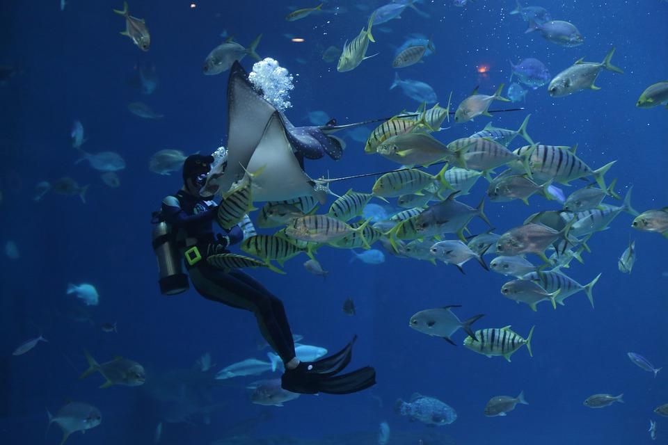 超夢幻「粉紅魟魚」現身海底 「5年只出現10次」超稀有:覺得牠在對我笑