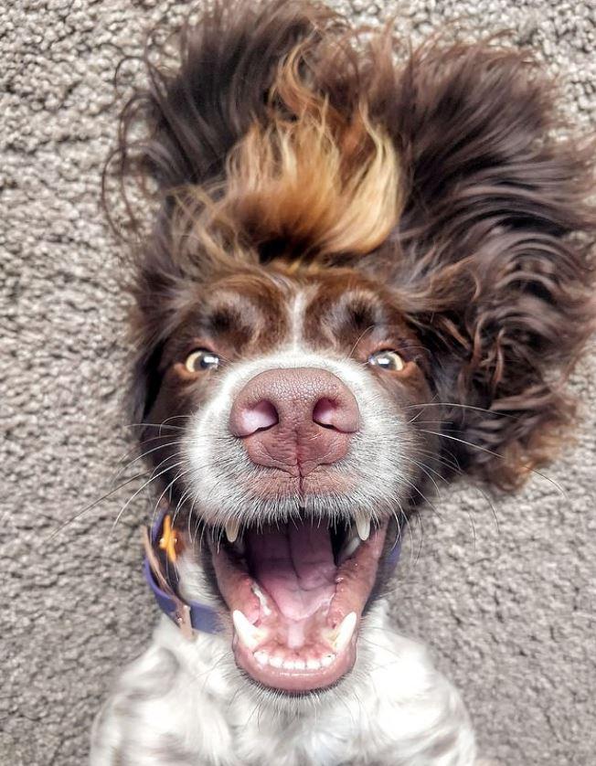網美狗「撞臉約翰藍儂」爆紅 天生就有偶像級「中分Q長髮」!