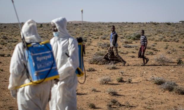 東非爆發「沙漠蝗蟲潮」10年最嚴重 一天狂吃「3.5萬人食物」!