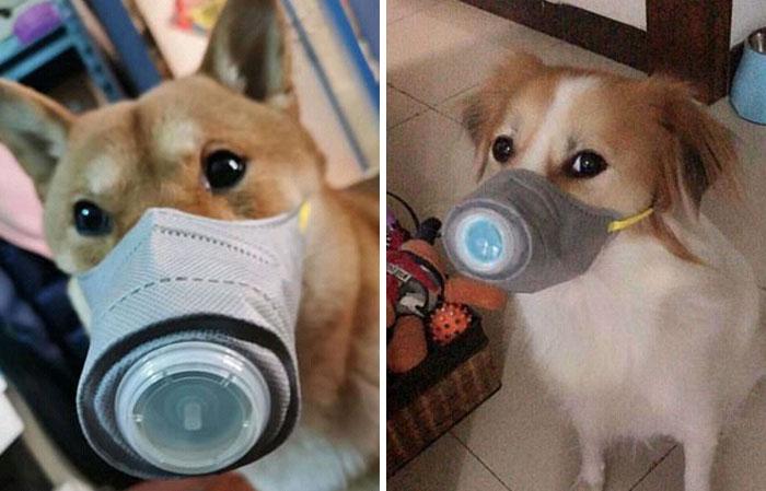 武漢肺炎太可怕!飼主急搶購「寵物口罩」3入210元銷量光速成長
