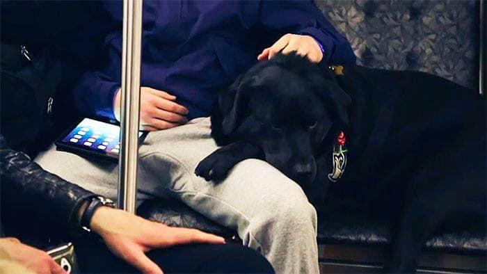 聰明狗「每天搭公車」到公園玩耍 牠「上車刷卡+找座位」比人類還熟練!