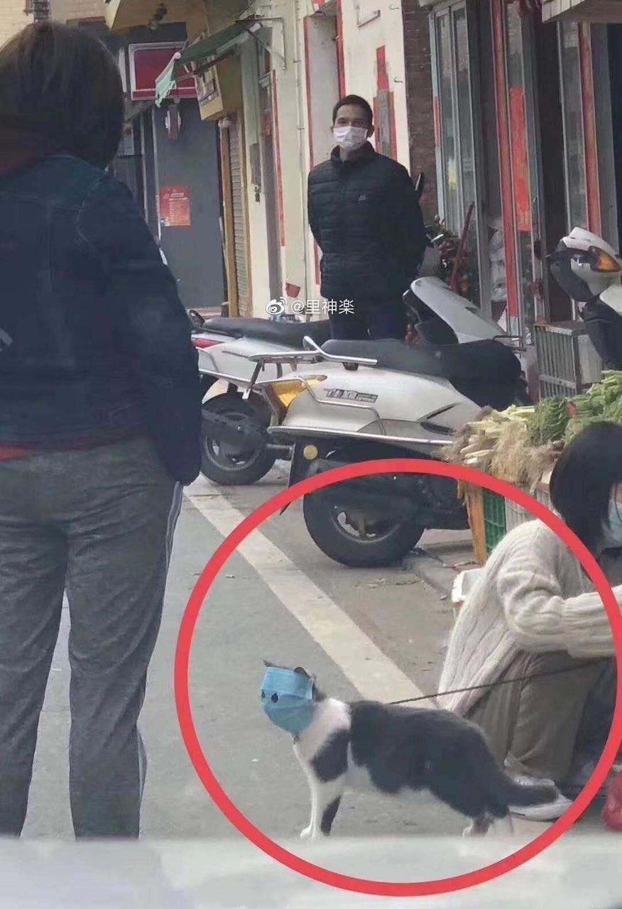 「口罩貓貓」曝光秒被神人「做成扭蛋」 正面激萌網友讚:好想買!