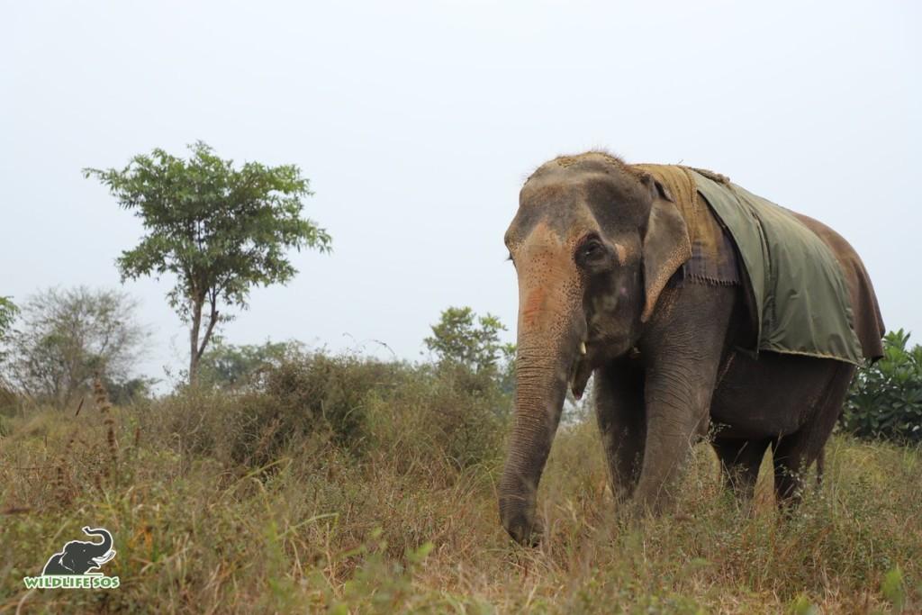 母象被人類「關46年」終獲自由 雙眼全盲「走進森林」網哭爆:我們對不起牠