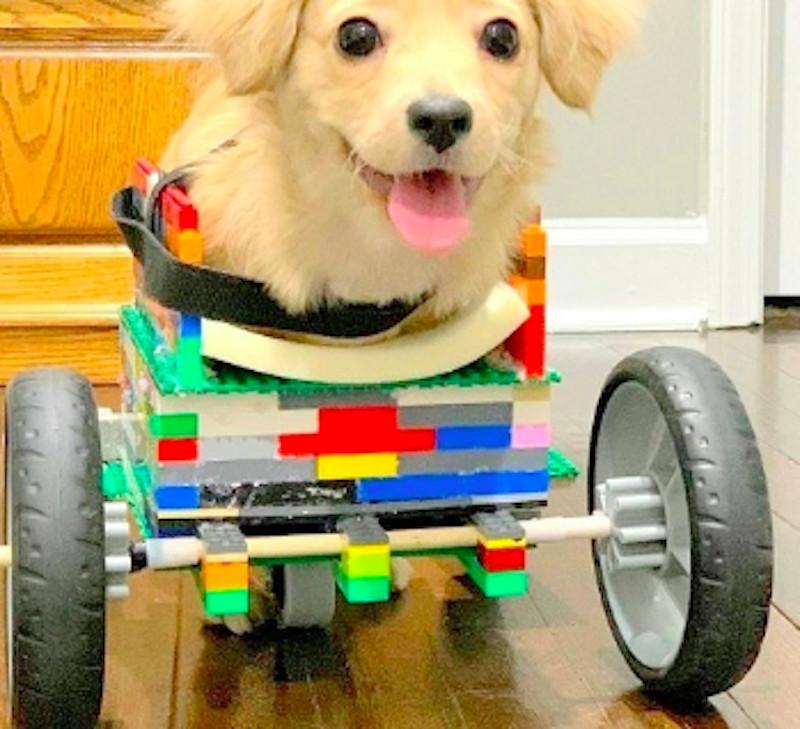 萌犬出生就「沒有前腳」被主人丟掉 男童「用樂高打造小輪椅」送牠當禮物!