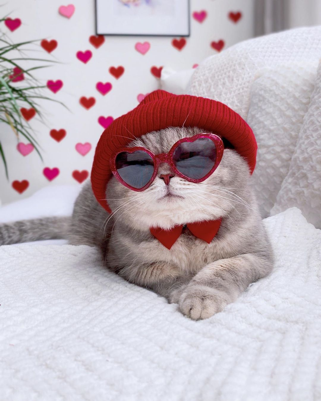 超上鏡「時尚帽控小貓」走在流行尖端 「帽子+眼鏡」每張都是雜誌封面!