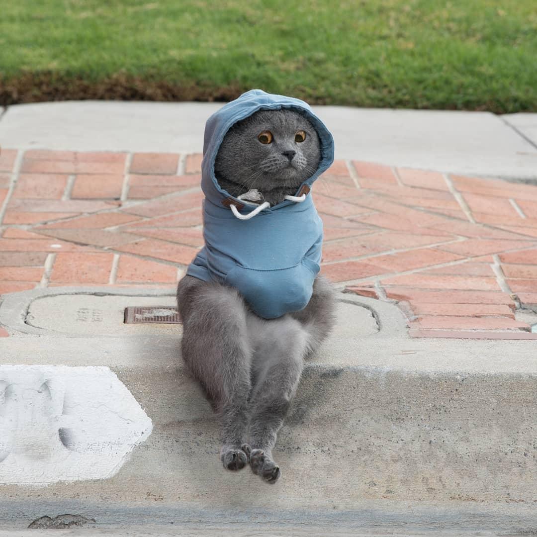 最有戲「圓臉胖貓」紅遍IG 靠「特效神操作」變身梗圖第一名!