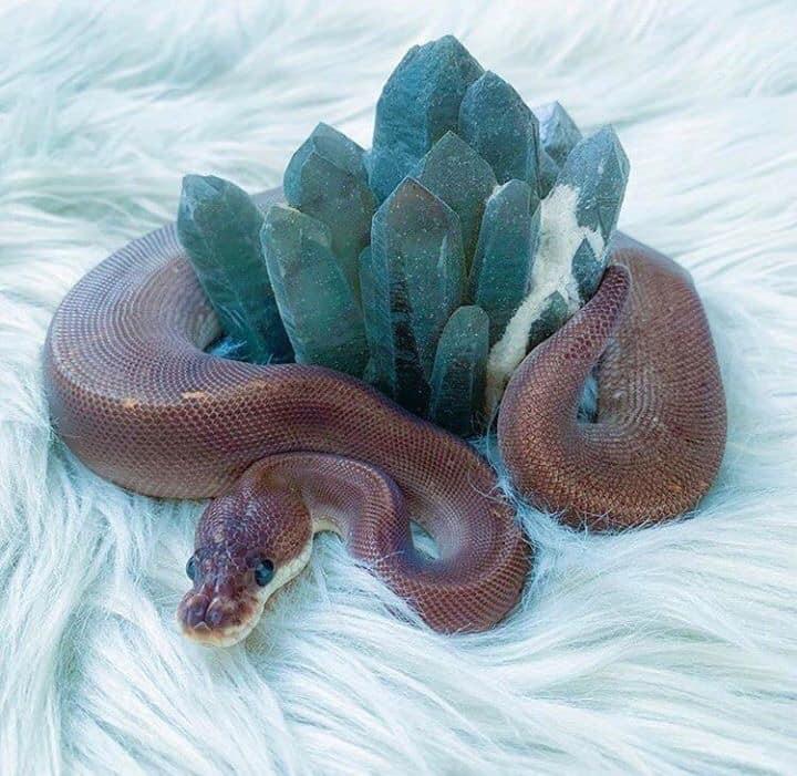 翻轉恐怖印象!「網美系小蛇」美到像仙女 整條「絕美珊瑚橘」超夢幻❤