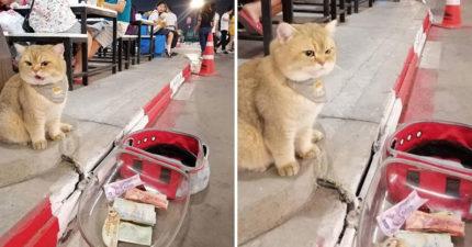 路邊驚見「胖橘貓乞討」厭世臉爆紅 網笑翻:這個身材沒人信啦!