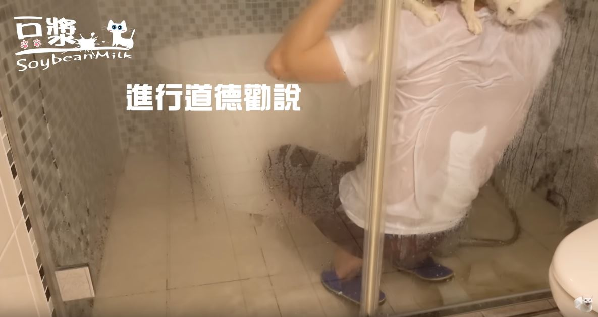 影/工程師洗貓影片「紅到上發燒第一」 網友全歪樓:只看到肉體濕身秀❤