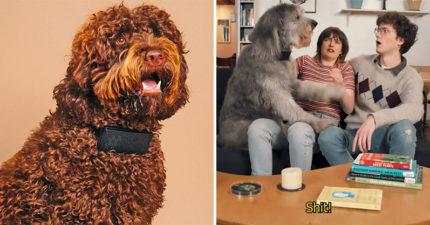 影/設計師發明「狗狗髒話項圈」分辨愛犬在講哪句幹話 萌犬一開口:ㄇㄉㄈㄎ!