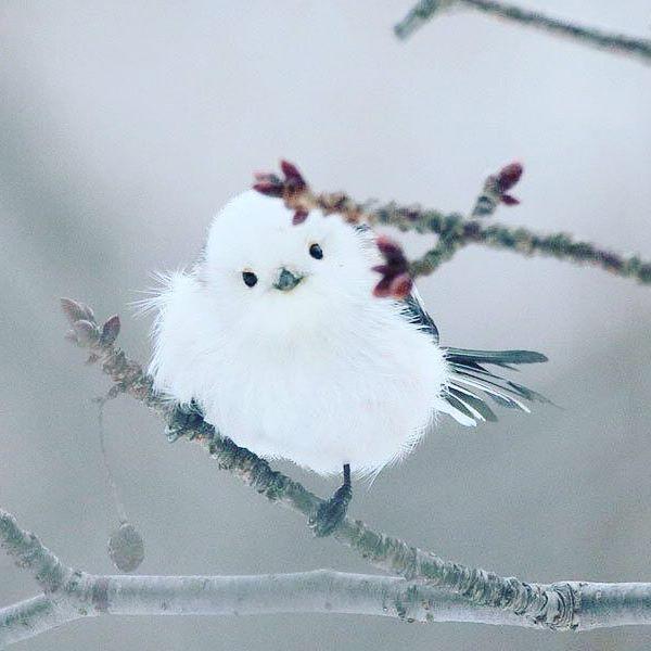 長出眼睛的雪球!日本「雪地妖精」萌度破表 轉身卻是「帥氣水墨畫風」❤