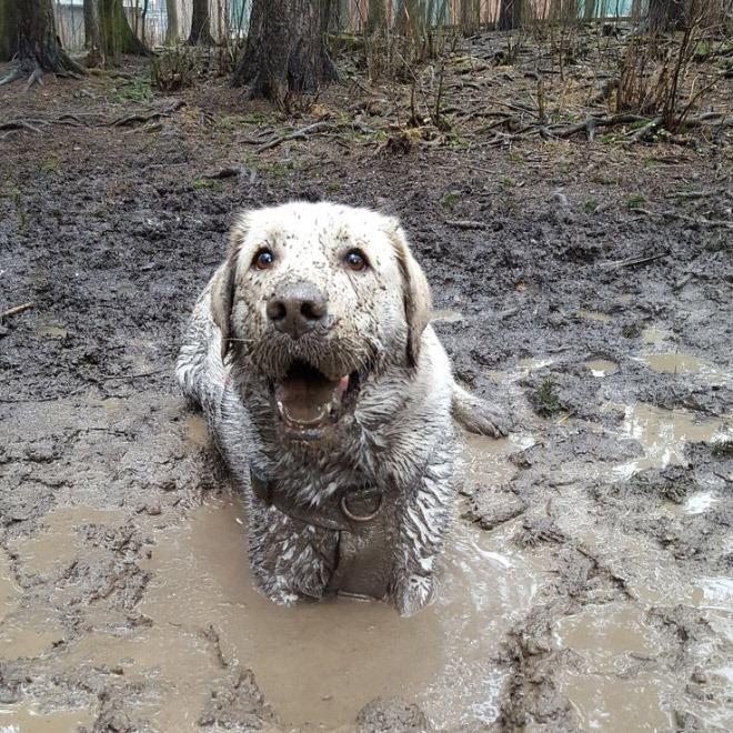 讓主人崩潰的「玩泥巴大失控」髒狗特輯 貪玩法鬥變成「有眼睛的狗便便」