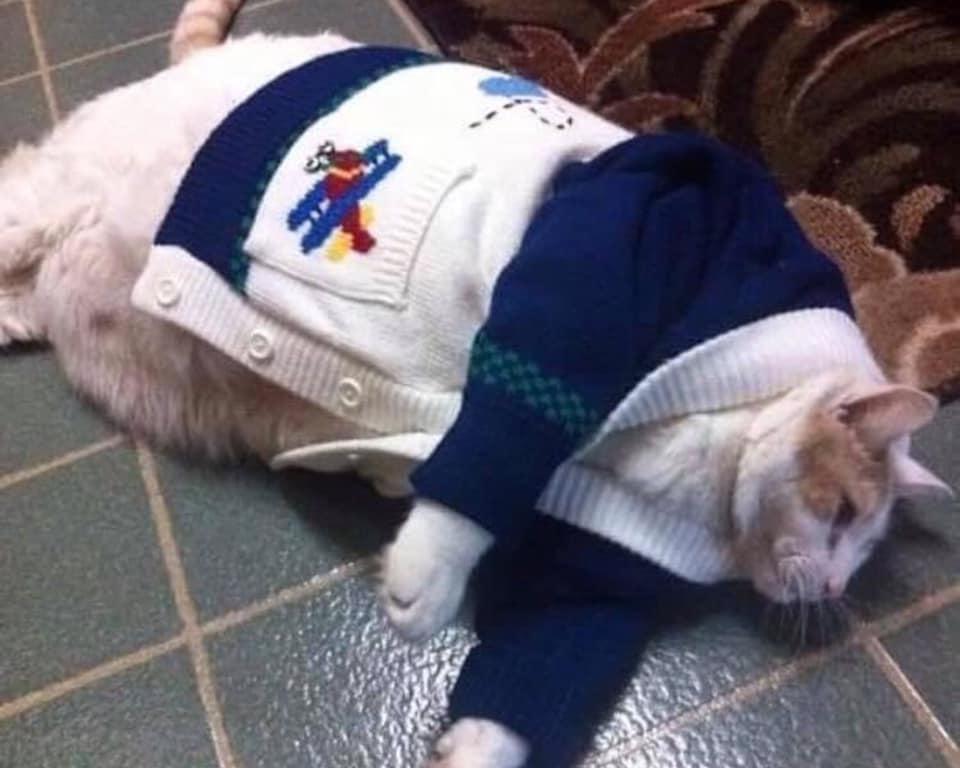 25隻「胖到能當相撲選手」的XXL貓咪 只看下半身還以為是乳牛!