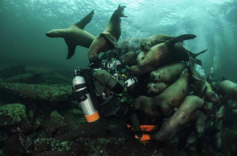 潛水員下水被「海豹軍團飛撲」他按下快門 竟意外拍到奇蹟照!