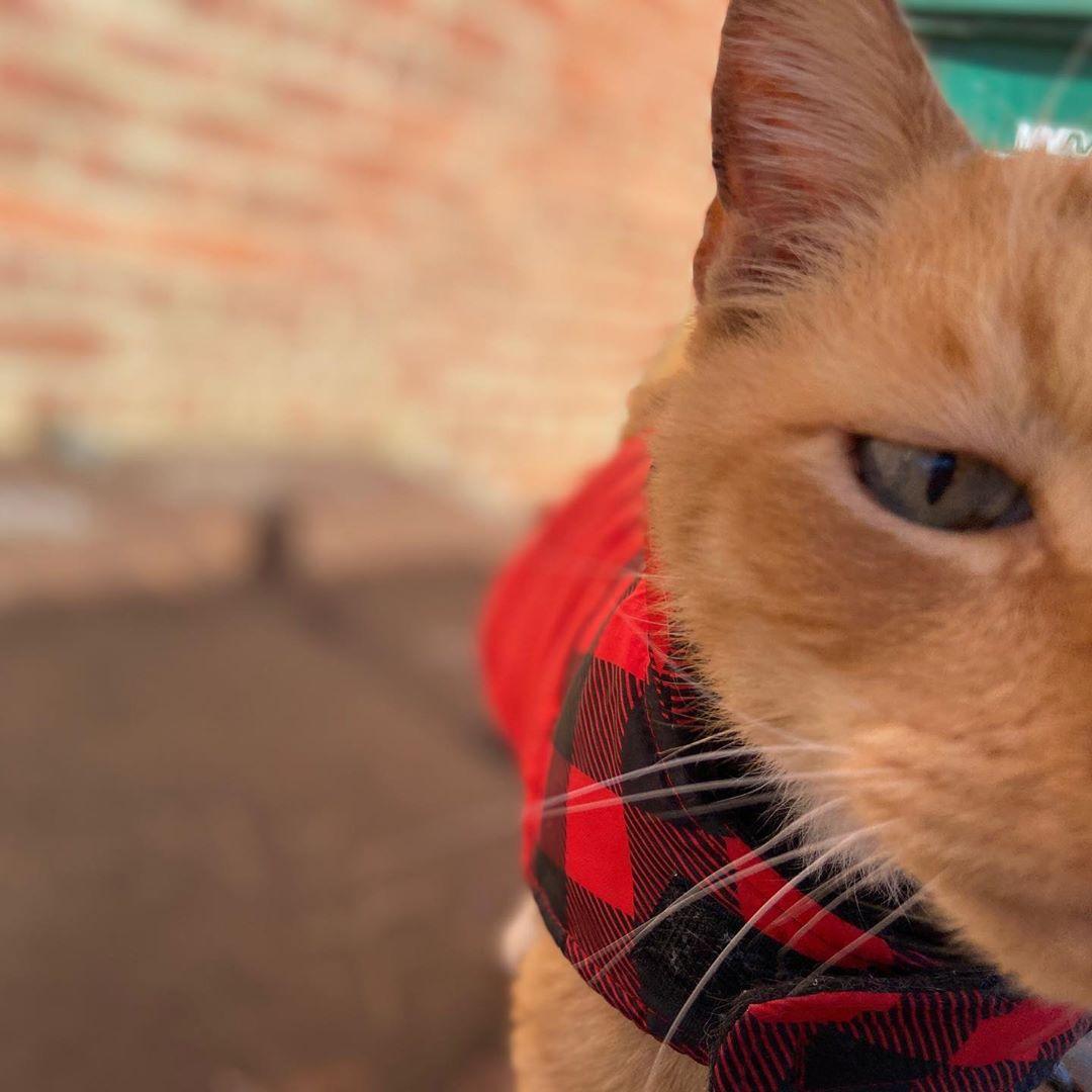 研究發現「貓咪最想吃的」其實是奴才 超真實「人體農場實驗」測出恐怖真相