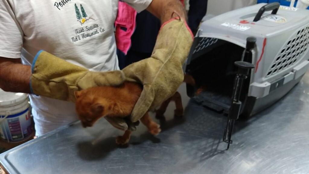 小女孩路邊撿回「孤兒橘貓」養兩個月「長相變了」獸醫:快放生