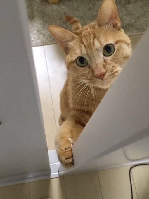「擬真貓咪面紙盒」細看才發現不對勁 網笑翻:差點就要報警了!