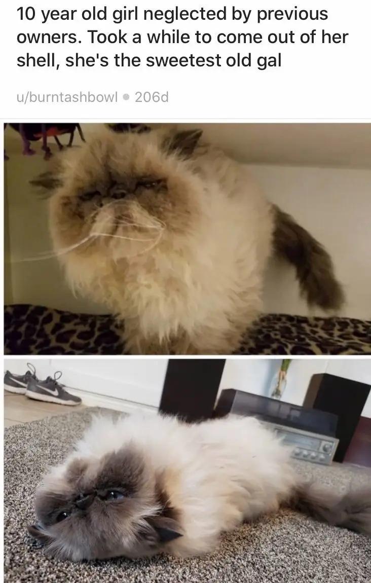 18張貓咪「領養前VS領養後」落差照 從「瘦弱→幸福肥」眼神變超溫柔!