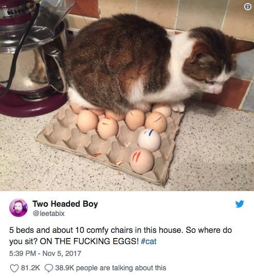 18隻「喜歡挑戰主人極限」的調皮貓 牠把「披薩當床睡」貓奴氣死!