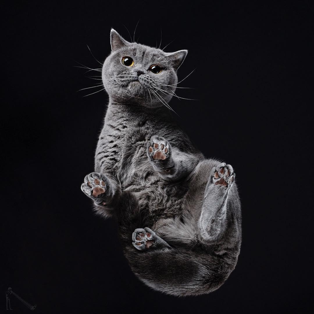 攝影師拍「從下面看小動物」的特殊視角 科基「超ㄎㄧㄤ表情」越看越上癮!