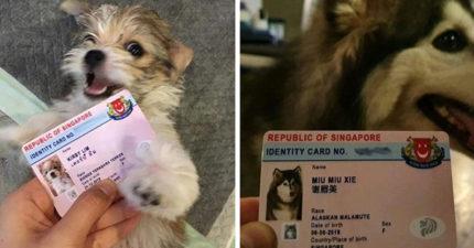 新加坡推出「寵物身分證」爆紅 「個資超詳細」還有毛孩內心話!