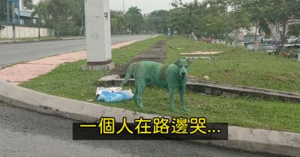 敗類「把狗漆成綠色」丟路邊等死 浪浪「怕到狂哭」沒人願意幫助牠QQ