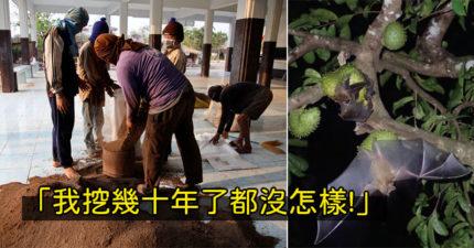 確診百例「照挖蝙蝠大便」 老翁「不怕武肺病毒」:反正不是泰國發源的!