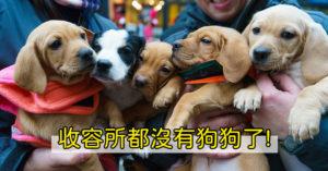 不只缺口罩!收容所狗狗「被領養光」怪現象 股市全崩「只有寵物業」反漲