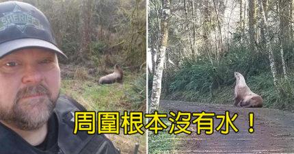 樹林驚見「活生生海獅」逛大街 員警忍笑自拍「荒謬景象」全體動員送回家!