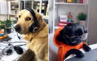 12隻「比人類還專心」的員工狗狗 牠上班「偷買零食」老闆捨不得罵!