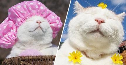 日本網紅貓靠「福氣呆萌臉」狂接代言 奴才心碎宣布:無緣過18歲生日