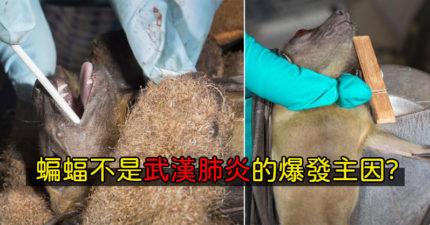 CNN表示蝙蝠絕非「武漢肺炎元凶」 專家坦言:是「人類」害到自己!