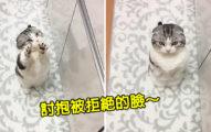 貓咪「向主人撒嬌討抱」被拒絕 下一秒「露出真面目」網笑翻!
