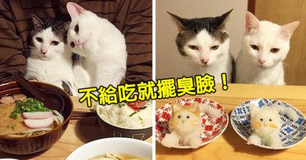 貓皇「永遠吃不到美食」表情逐漸母湯 最後「眼神死」氣瘋:換一個奴才!