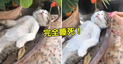 喵星人用「阿伯姿勢」大睡午覺 被惡整「完全0反應」貓奴笑翻!