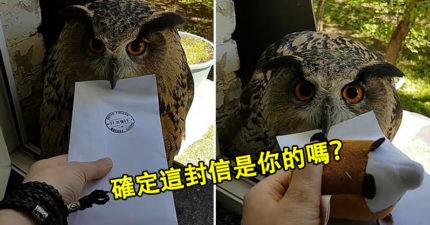 真實版哈利波特!貓頭鷹「當郵差送信」嚇壞收件人 牠超盡職「站窗邊」等簽收