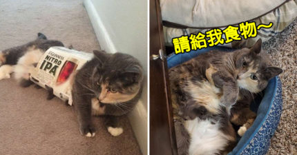 貪吃貓長太胖「被主人逼減肥」 牠堅持等待「美食從天空降臨」讓貓奴笑翻!