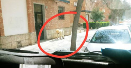在路邊發現「超巨型狗」可是長好醜 仔細一看「發現是人」!