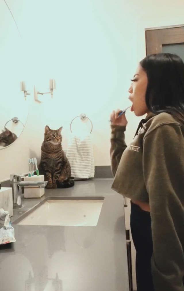 比你還討厭蛀牙!貓皇每天跟媽咪「一起刷牙」貓奴無奈:牠覺得自己是人