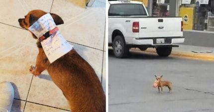 自主隔離太想吃餅乾 天才男竟「叫狗狗去幫買」還指定口味!