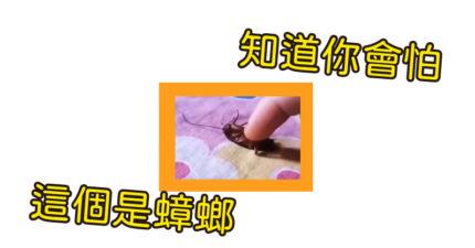 網友PO「寵物蟑螂」幸福翻肚「討摸摸」影片 小強變乖了?