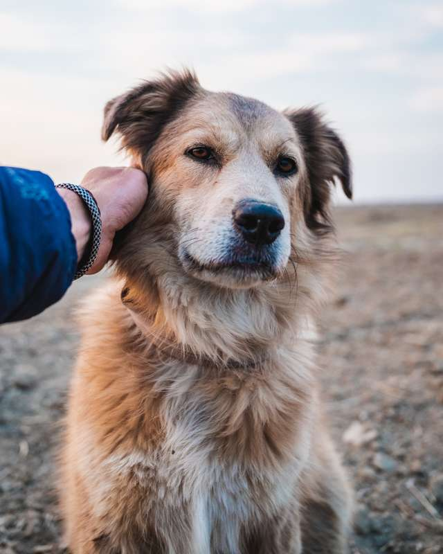 帶愛犬散步!路線是「環遊世界」每天走8小時 肉掌足跡「遍佈37國」