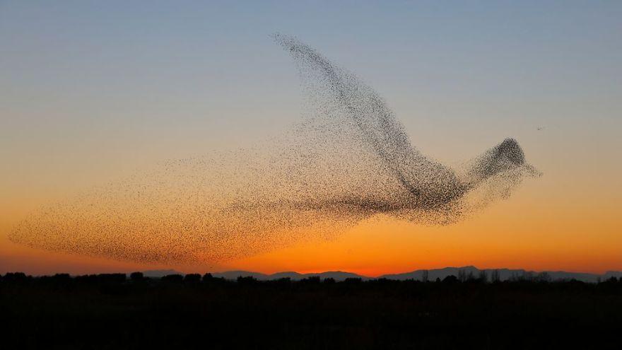 賞鳥意外拍到小鳥群「花10秒合體」成巨鳥 嚇壞天敵