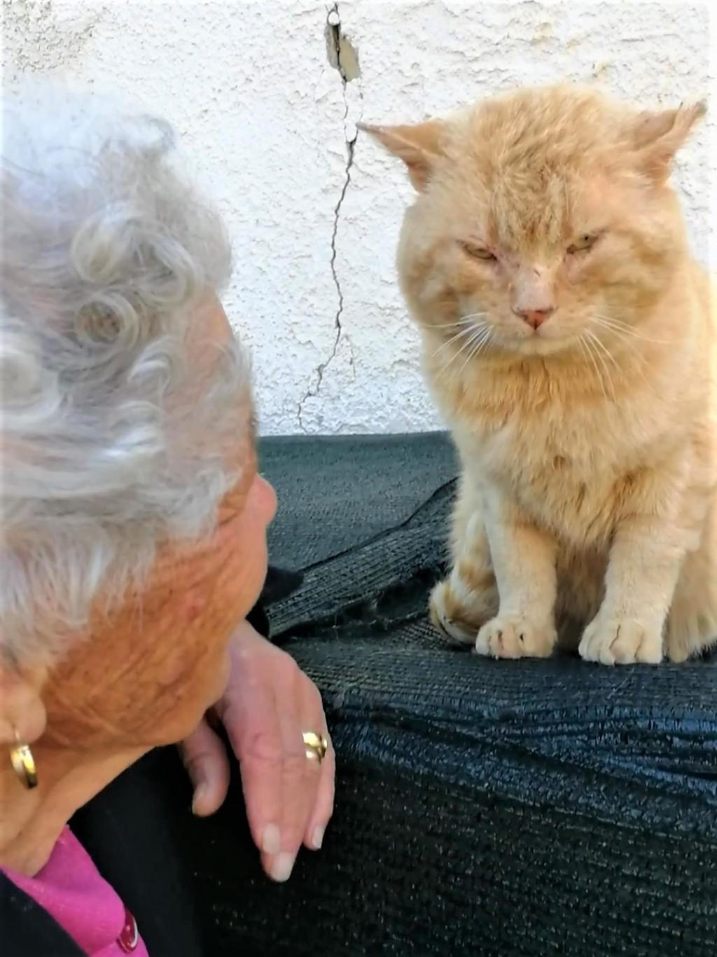 奶奶與橘貓「因地震失散」 3年後奇蹟重逢牠興奮到「猛撞頭」示愛!