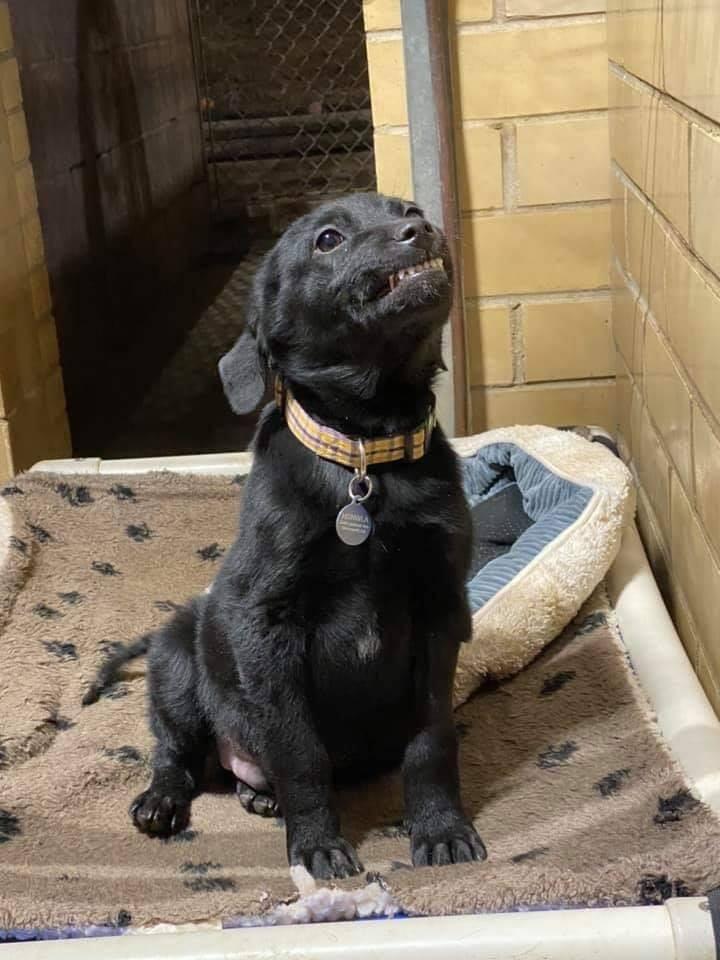 可愛微笑狗「拼命露齒笑」想找新家 說牠「很棒」會更認真笑:快來疼我!
