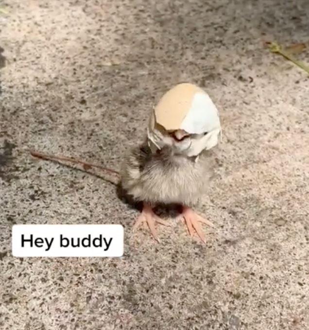 小鳥意外「被蛋殼卡住」向人類求救 摘下「天然頭盔」反應超萌❤