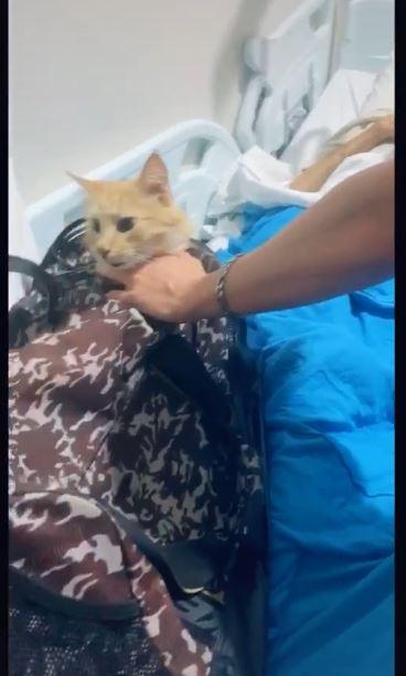 最好的朋友!爺爺罹癌將離世...家人冒險「偷渡貓咪」進醫院見最後一面