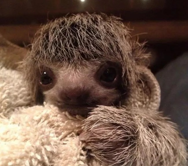 28張「讓你控制不住微笑」的動物寶寶照 小綿羊「俏皮吐舌」萌度破表❤