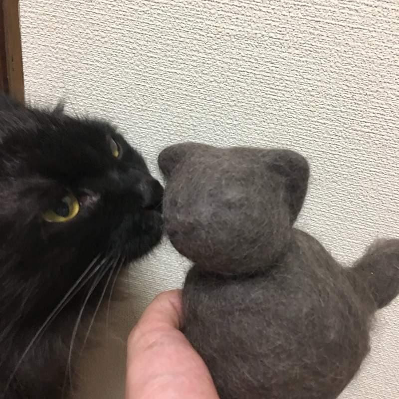 奴才分享把「貓皇體毛→Q萌毛球」系列 喵星人「頭上站著毛老鼠」意外爆笑!